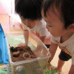 【1歳児】カブト虫を発見‼