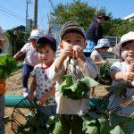 【2歳児】初めての芋ほり!