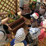 【2歳児】お花を植えたよ!