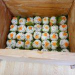 R2 6/11 柿の葉寿司を食べました 【すえさみこども園】