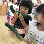 [3歳児] きゅうりが大きくなったよ!