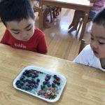 [3歳児] ブルーベリー食べたよ♪